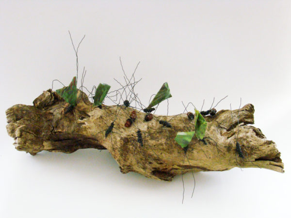 Natur Insekten Ameisen